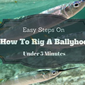 how to rig ballyhoo